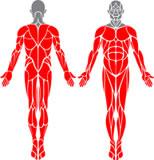 obrázek-člověk se svalama-komplet
