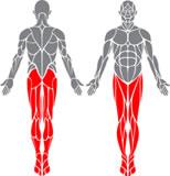obrázek-člověk se svalama-nohy