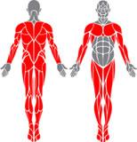 obrázek-člověk se svalama-komplet bez břicha